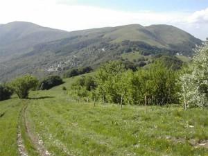 Sullo sfondo Monte Chiappo (1699 m s.l.m) salendo verso Cavalmurone (1670 m s.l.m)